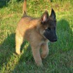 J-puppy